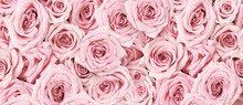 Background Image Of Pink Roses...
