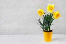 Beautiful Yellow Daffodil Seed...