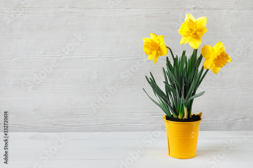Photographie Beautiful yellow daffodil seedling in bucket, on wooden background