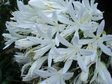 Beautiful Bunch Of  White Flowers