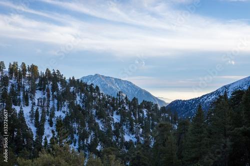 view of mountain peak through the pines