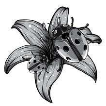Monochromatic Ladybugs In The ...