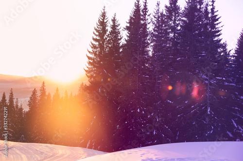 Cuadros en Lienzo Picturesque view of snowy coniferous forest in winter