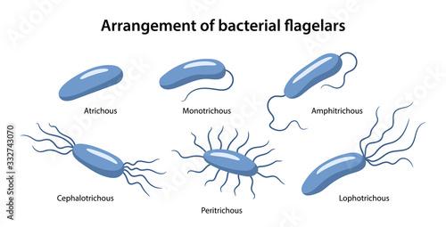 Arrangement of bacterial flagella Fototapet
