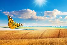 Butterfly On Wheat Field Backg...