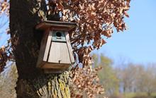 Bird Nesting Box Hanging On A Tree