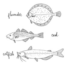 Flounder, Cod, Catfish. Black Line Sketch Collection Of Fish Isolated On White Background. Doodle Hand Drawn Fish And Seafood Icons. Vector Illustration