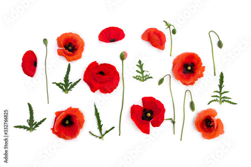 Flowers red poppies ( corn poppy, corn rose, field poppy ) on a white background. Top view, flat lay - 332766825