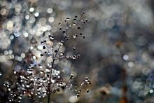 Autumn Dew On The Grass.