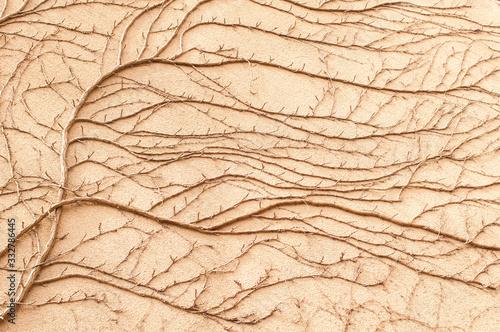 Ramas secas de una planta trepadora sobre una pared Fotobehang