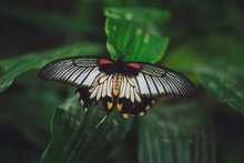 A Beautiful Butterfly Sits On ...