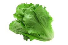 Close Up On Fresh Green Lettuc...