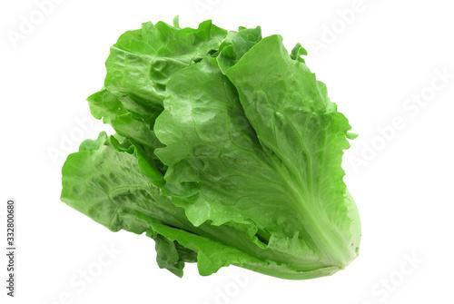 Obraz close up on fresh green lettuce texture - fototapety do salonu