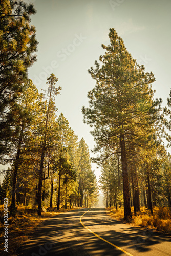Empty road curving through pine forest in autumn sunset light - 332804023