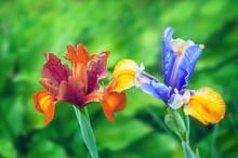 Beautiful Bright Multi-color I...