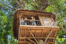Boys In A Tree House. Happy Childhood