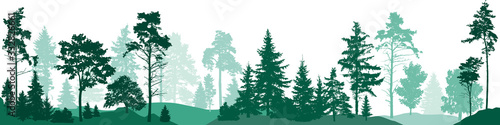Fir trees forest. Isolated on white background. Vector illustration - 332826661