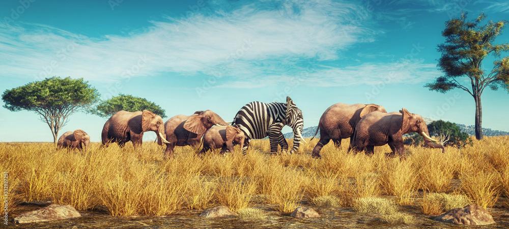 Fototapeta Elephant zebra different