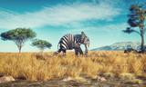 Fototapeta Zebra - Elephant zebra different