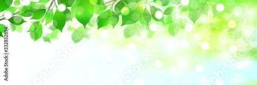 Foto 新緑 葉 緑 背景