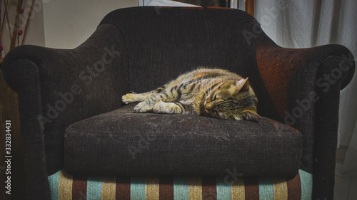 Fotografie, Obraz Sleeping cat