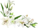 narożnik z jasnych kwiatów lilii na białym tle
