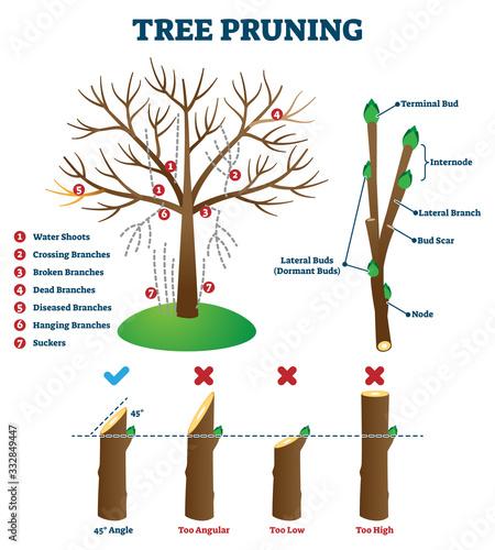 Fototapeta Tree pruning vector illustration. Labeled educational plant shaping scheme obraz