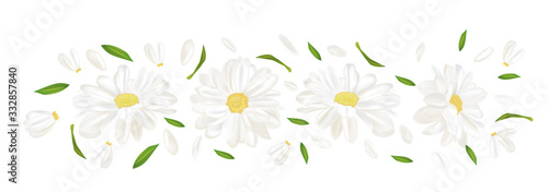 3D realistic chamomile flower. Chamomile isolated on white background. Delica...