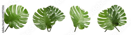 Set with tropical Monstera leaves on white background Canvas