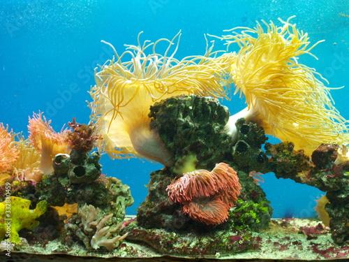 Photo Zwierzęta, ukwiały wodne, kolorowa natura, koralowce.