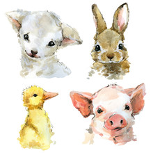 Cute Watercolor Lamb, Rabbit, Piggy, Duckling. Cartoon Farm Animals Illustration.