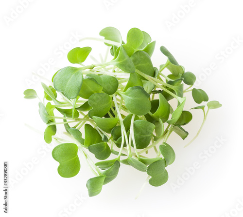 Heap of micro greens arugula sprouts isolated on white background Canvas Print