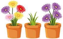 Three Clay Pots With Beautiful Flowers On White Background