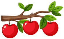 Red Apples On Wooden Branch On White Background