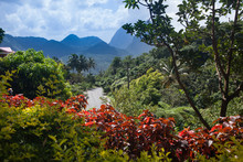 Tropical Forest Of Caribbean S...