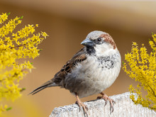 Finch Bird Perched On A Wooden Fence With A Soft Creamy Brown Ba