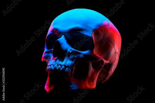 Side view of gypsum model of the human skull in neon lights isolated on black Fototapeta