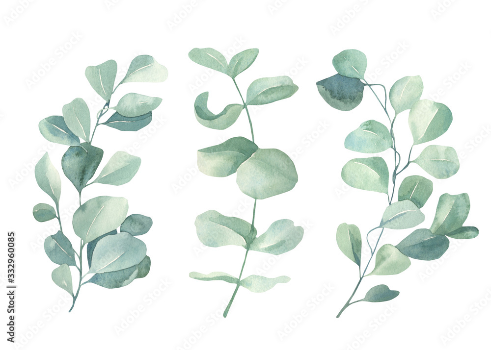 Fototapeta Watercolor floral illustration set - green eucalyptus leaf branches collection, for wedding invitation, greetings cards, wallpapers,  background. Eucalyptus, green leaves.