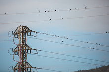 Flock Of Little Sparrows Standing On Lines Of Electric Wire Cable Steel Pole