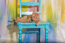 Cat On A Blue Chair