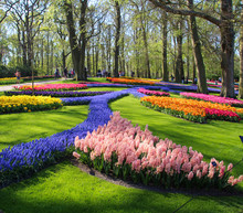 Field Of Colorful Flowers In S...