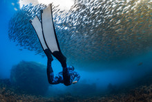 Diver Diving Undersea Near Shoal Of Fish