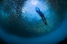 Freediver With Fish