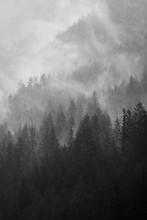 Fog Among The Pines