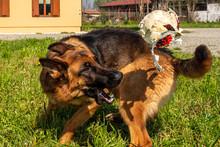 Giochi Da Cani