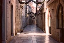 Cat Running Through Stone Alley