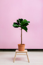 House Plant In A Studio