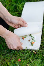 Woman With Album Making Herbarium On Green Grass In Park