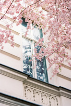 Window Framed By A Blooming Tree