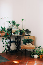 There Is No Such A Thing As Too Many Plants